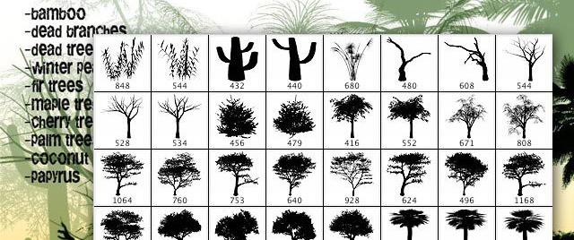les arbres qui ne voulaient pas mourir - Page 2 Tree--g_12637597542