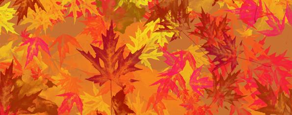 8 Large Maple Leaf Brushes